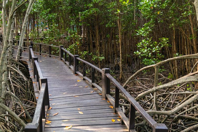 Le passage couvert au pont en bois dans la forêt image libre de droits