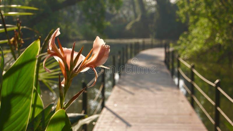 Le passage couvert intéressant et beau en parc photographie stock