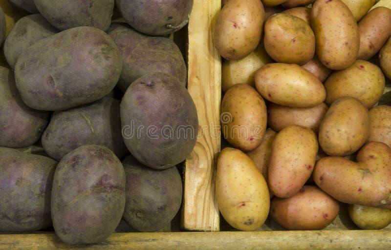 Le patate sono due generi fotografie stock