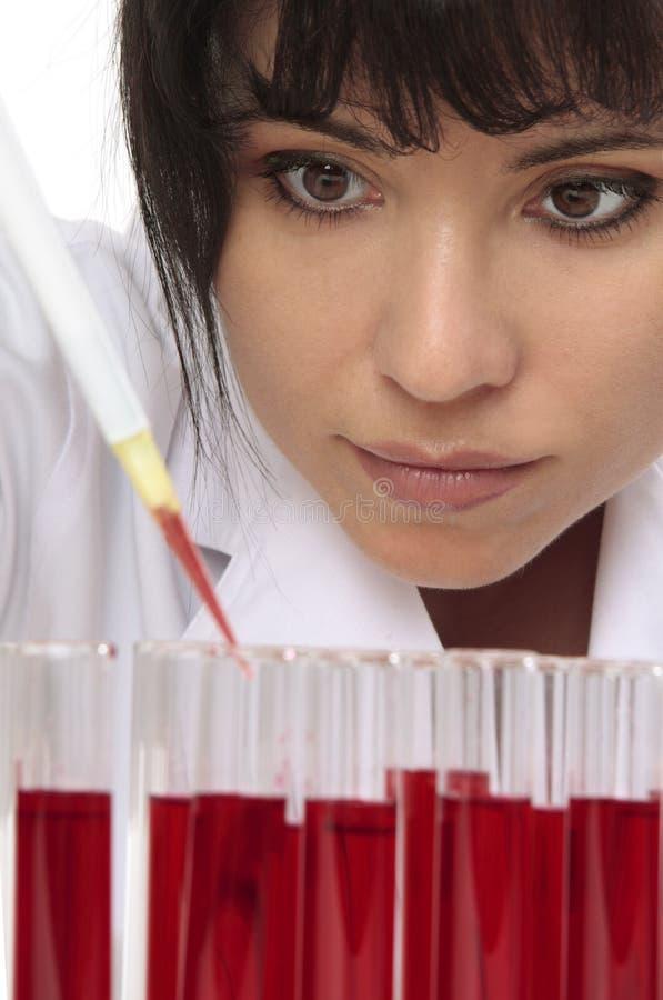 Le pathologiste prélève l'échantillon pour le test photographie stock libre de droits