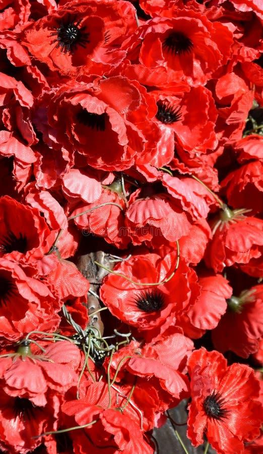 Le pavot rouge est devenu un symbole de souvenir de guerre photographie stock