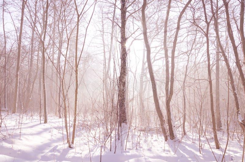 Le pays des merveilles d'hiver : forêt brumeuse dans la lumière de matin images stock