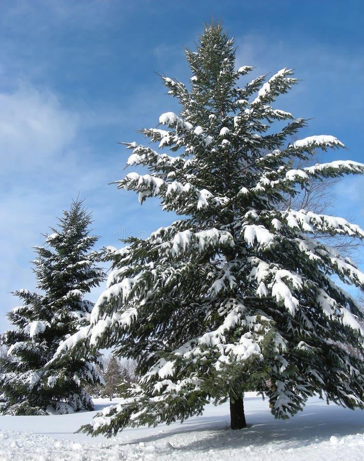 Le pays des merveilles de l'hiver image libre de droits