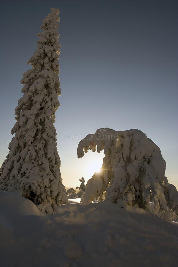 Le pays des merveilles de l'hiver de la Laponie photos stock
