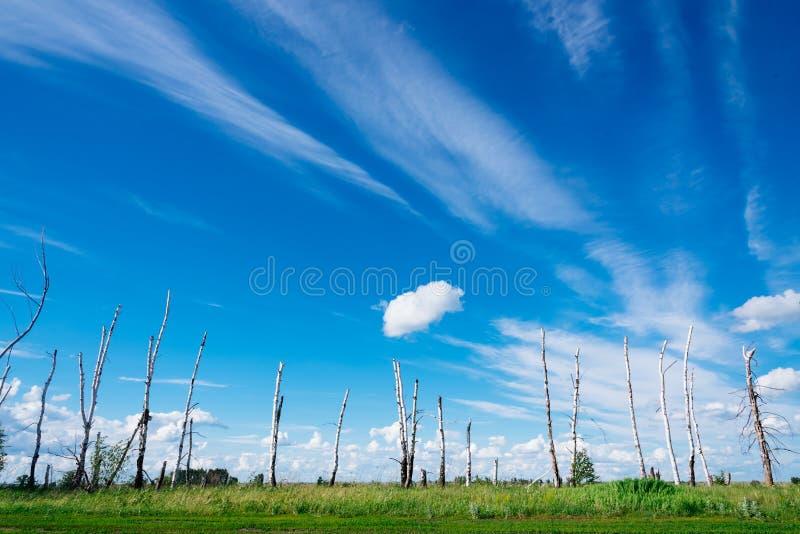 Le paysage dépeint les arbres cassés en raison d'un grand hurric photographie stock