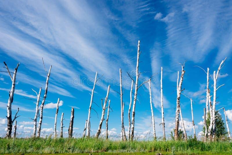 Le paysage dépeint les arbres cassés en raison d'un grand hurric image libre de droits
