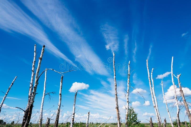 Le paysage dépeint les arbres cassés en raison d'un grand hurric image stock