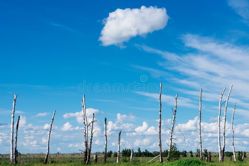 Le paysage dépeint les arbres cassés en raison d'un grand hurric photo stock