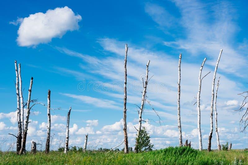 Le paysage dépeint les arbres cassés en raison d'un grand hurric photos stock