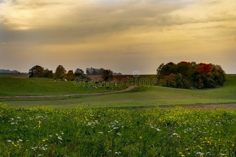 Le paysage d'automne avec des prés, vaches, a coloré des arbres photographie stock libre de droits