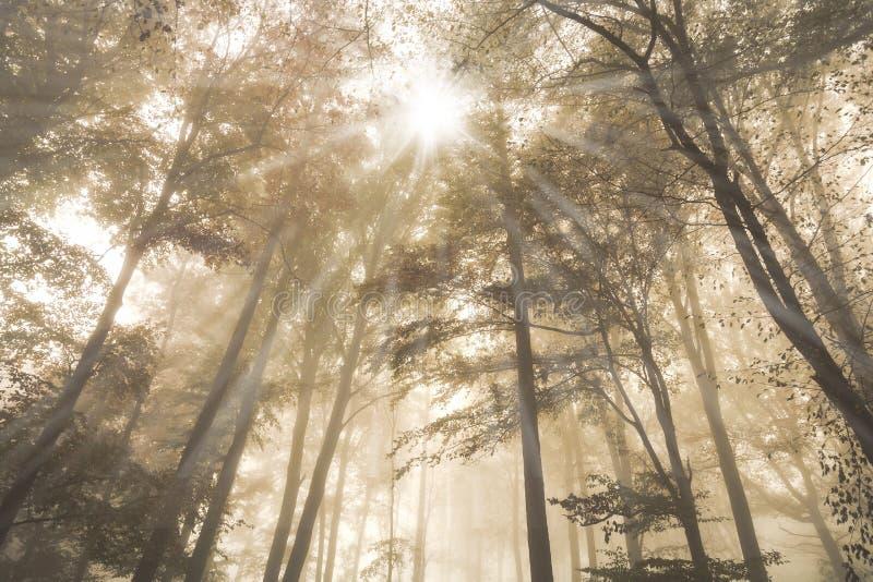 Le paysage d'automne avec la forêt et le soleil brumeux mystérieux de conte de fées rayonne pendant le matin photo stock