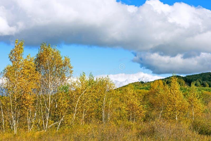 Le paysage d'automne de prairie image libre de droits