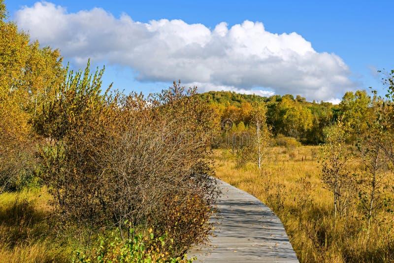 Le paysage d'automne de prairie images libres de droits