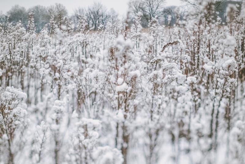 Le paysage d'hiver avec la neige a couvert des usines et des arbres Petite profondeur de champ pour augmenter l'effet Scène de l' images stock