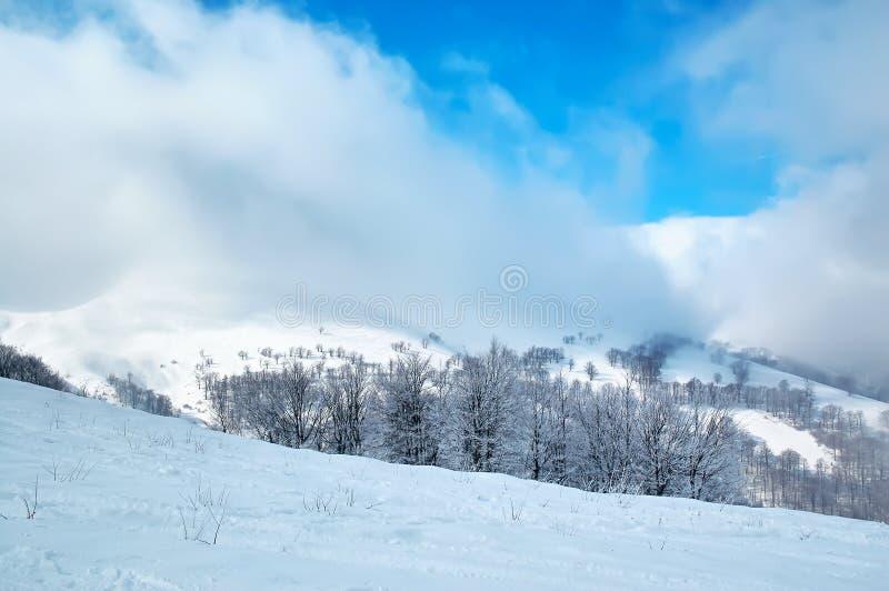 Le paysage d'hiver avec la neige a couvert les arbres et la tempête de neige photographie stock libre de droits