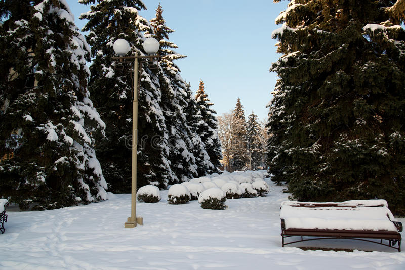 Le paysage d'hiver avec un banc couvert de neige au milieu de l'hiver a givré des arbres et des réverbères Rues de Stavropol, Cau images stock