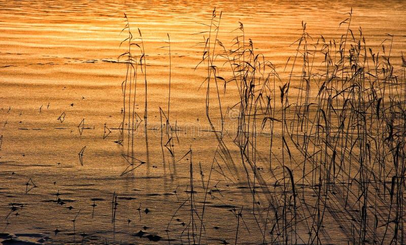 Le paysage d'hiver de coucher du soleil dehors couvre de chaume la nature belle photographie stock libre de droits
