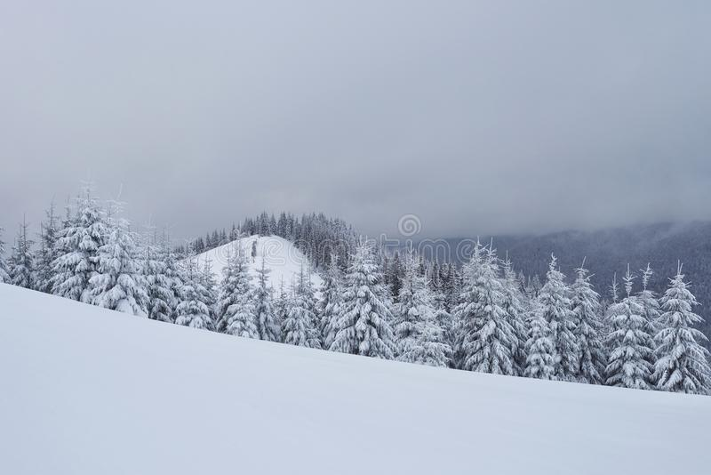 Le paysage de montagne de calme d'hiver de matin avec de beaux sapins de givrage et le ski dépistent des congères de thrue sur la photographie stock libre de droits