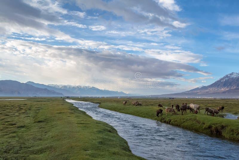 Le paysage de Pamirs photographie stock libre de droits