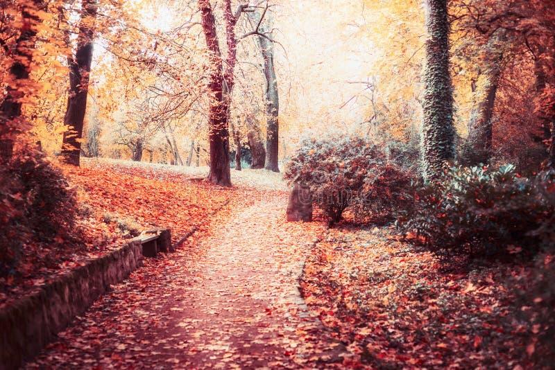 Le paysage de parc d'automne avec le chemin, les arbres, le beau feuillage et le soleil brillent, nature extérieure de chute image stock
