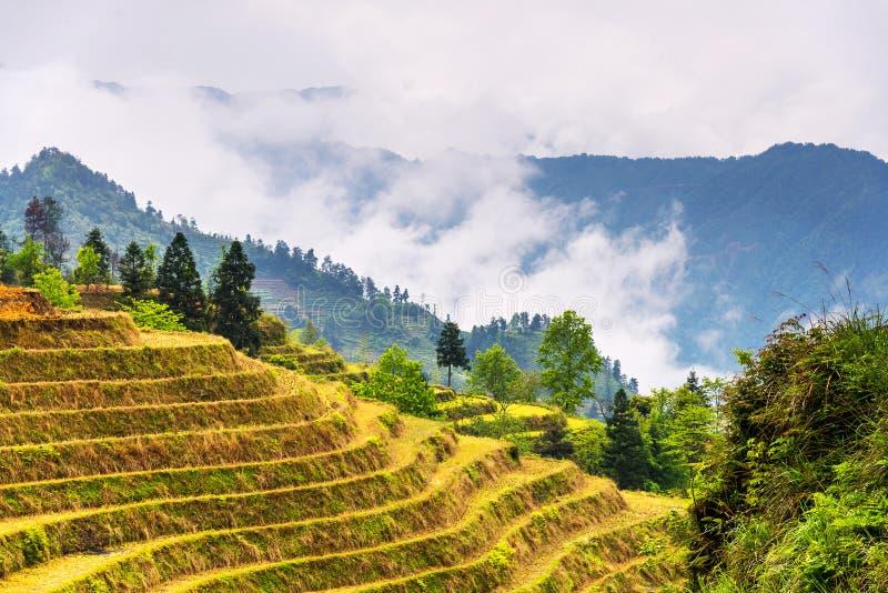 Le paysage de terrasses de riz peut dedans (village Dazhai, province de Guangxi photo libre de droits
