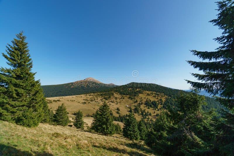 Le paysage du b?ti Hoverla est la plus haute montagne des montagnes carpathiennes ukrainiennes, Chornohora photographie stock