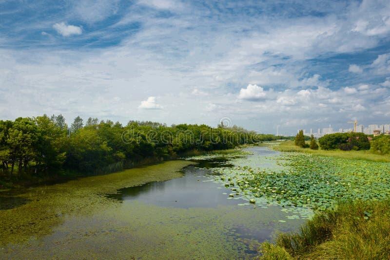 Le paysage du lac Taihu photo libre de droits