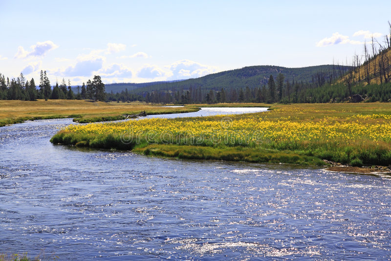 Le paysage du stationnement national de Yellowstone image stock