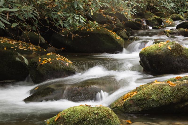 Le paysage intime de montagne avec de l'eau circulant sur la mousse a couvert des roches de feuilles de chute, rhododendrons images libres de droits
