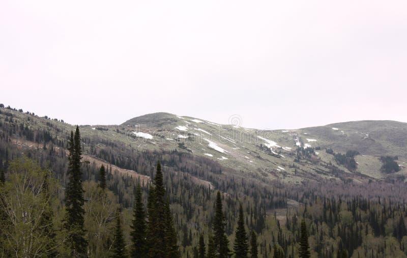 Le paysage magnifique des montagnes d'Altai les montagnes couronnées de neige, forêt épaisse photo stock