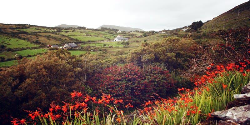 Le paysage marin avec le crocosmia orange fleurit dans Coutкy Kerry - photo de vintage photos stock