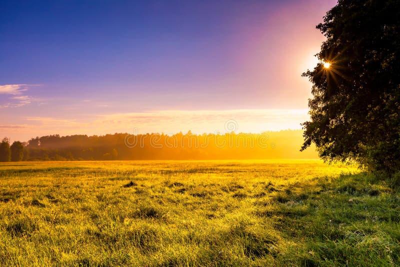Le paysage mystérieux et flou de pré a photographié en Pologne image stock