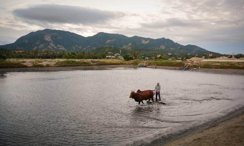 Le paysage rural en Phan a sonné, le Vietnam images libres de droits