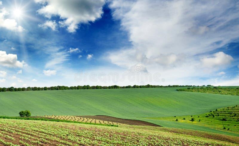 Le paysage rural pittoresque avec un gisement vert de ressort s'est allumé par image stock