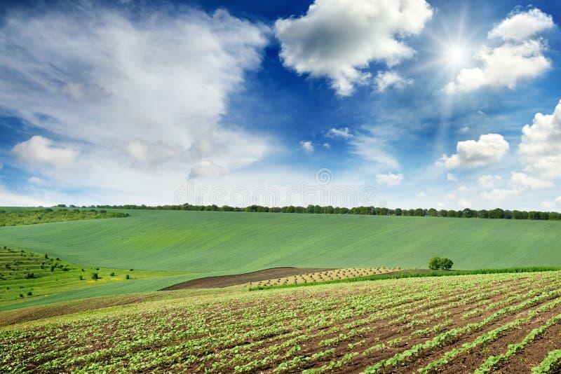 Le paysage rural pittoresque avec un gisement vert de ressort s'est allumé par photo libre de droits