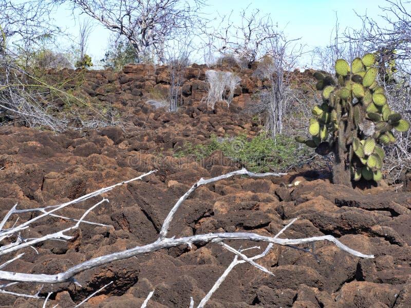 Le paysage sur l'île de Baltra se compose des pierres de lave, Galapagos, Equateur image stock