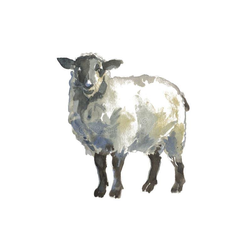 Le pecore illustrazione vettoriale