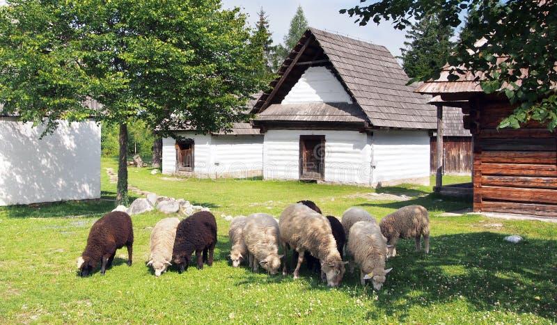 Le pecore si avvicinano alle case pieghe fotografia stock