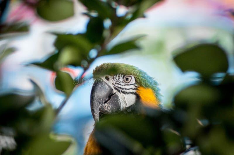 Le perroquet photo libre de droits