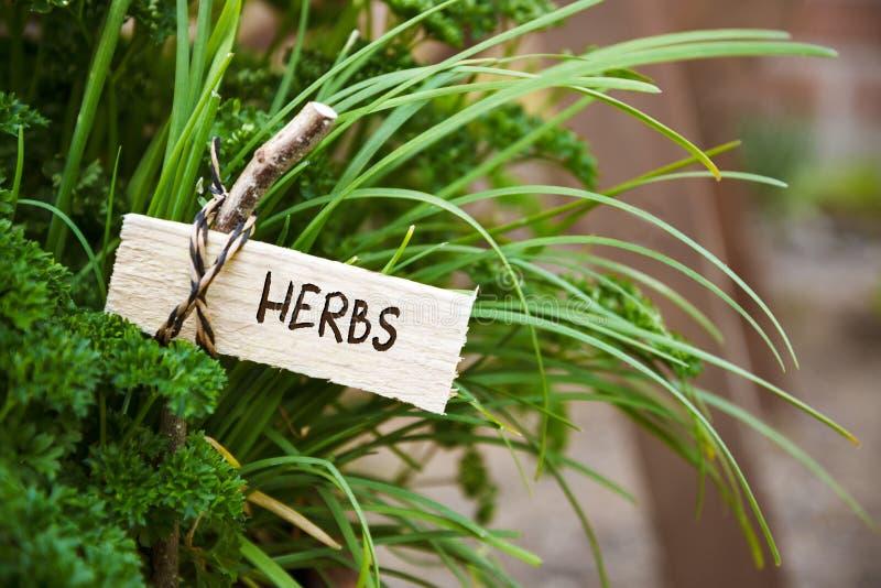 Le persil et l'ail de société avec un marqueur ont marqué des herbes, le jardin Co photo libre de droits