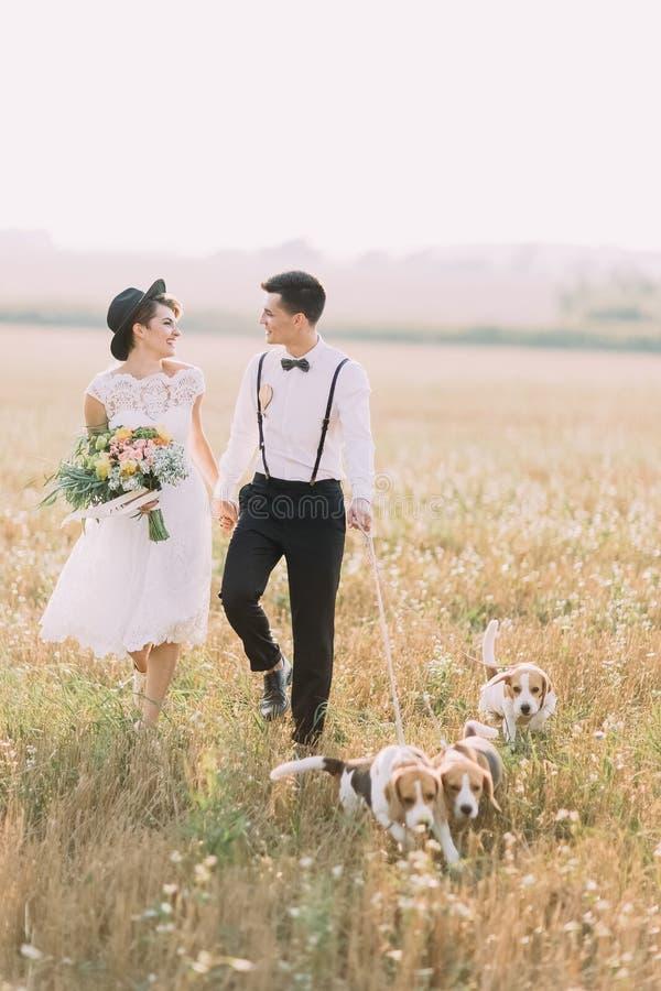 Le persone appena sposate sono sorridenti, parlanti e camminanti con i tre cani nel campo soleggiato La sposa sta giudicando fotografia stock libera da diritti