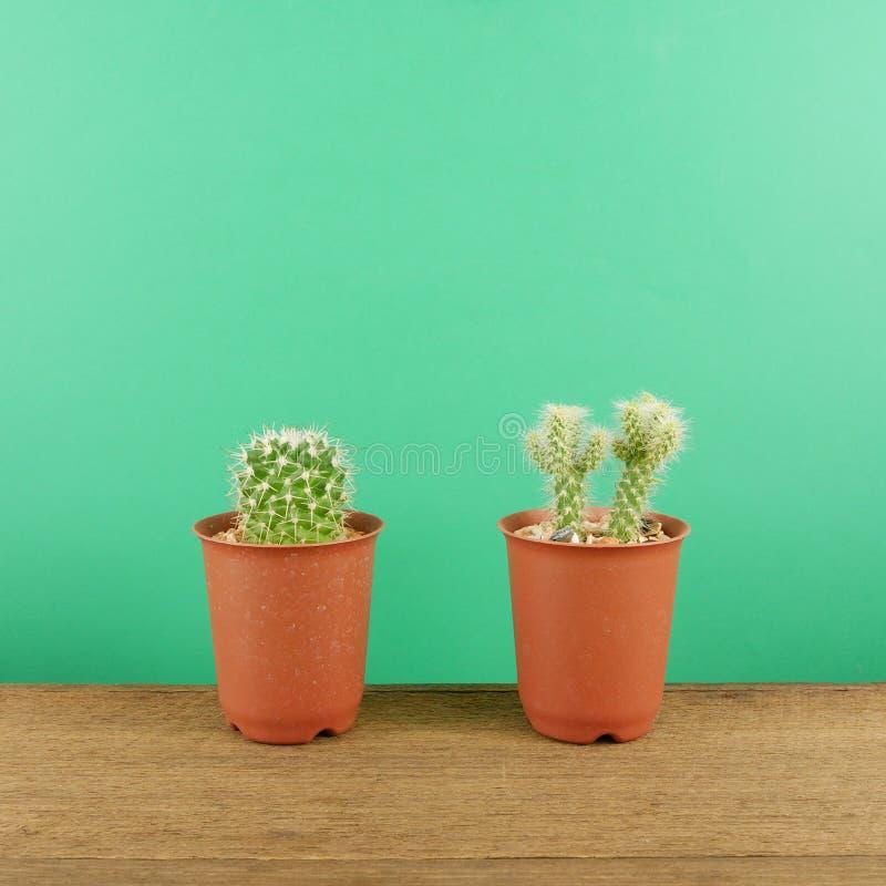 Le petit cactus vert dans le petit pot brun d'usine sur les planches en bois brunes images stock