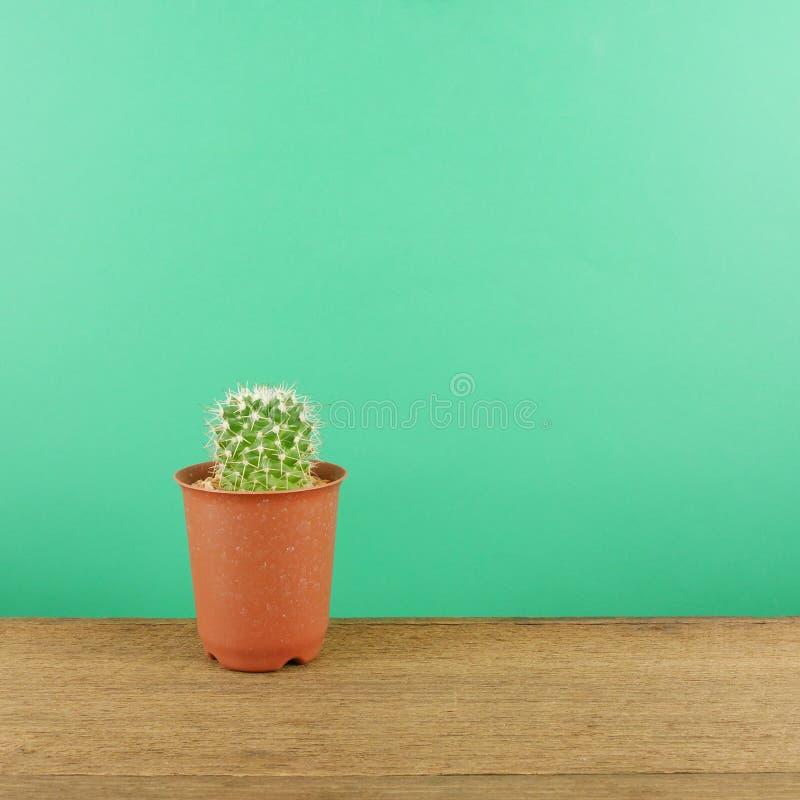 Le petit cactus vert dans le petit pot brun d'usine sur les planches en bois brunes image libre de droits