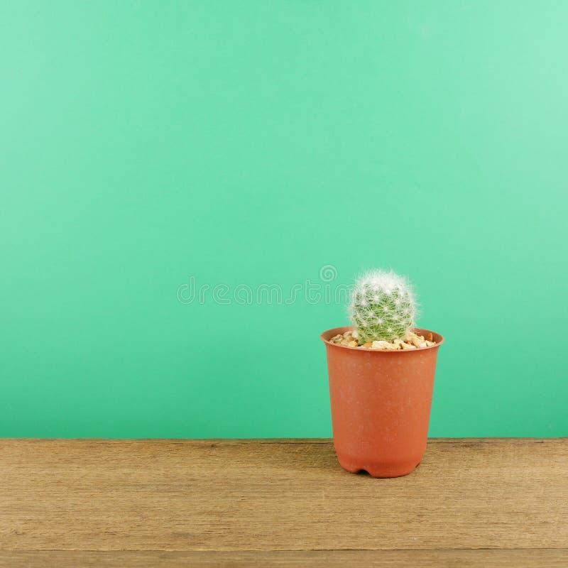 Le petit cactus vert dans le petit pot brun d'usine sur les planches en bois brunes photos libres de droits