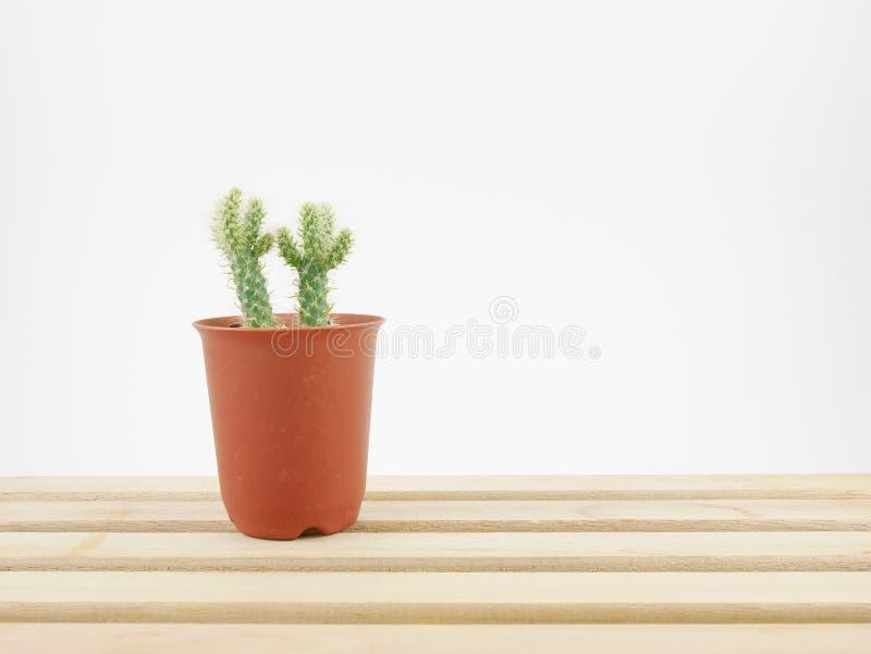 Le petit cactus vert dans le petit pot d'usine sur le plateau en bois photos libres de droits