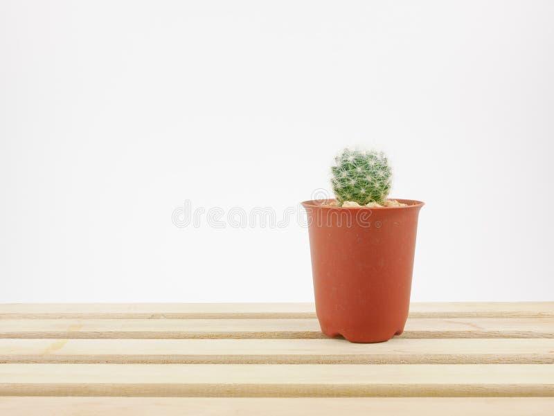 Le petit cactus vert dans le petit pot d'usine sur le plateau en bois photos stock