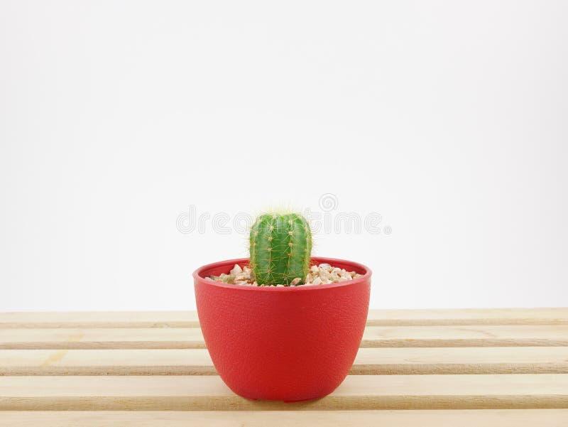 Le petit cactus vert dans le petit pot d'usine sur le plateau en bois image stock