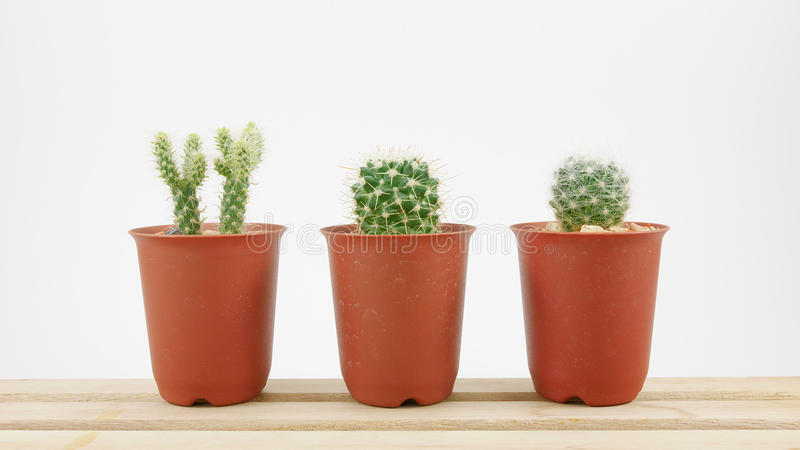 Le petit cactus vert dans le petit pot d'usine sur le plateau en bois photographie stock libre de droits
