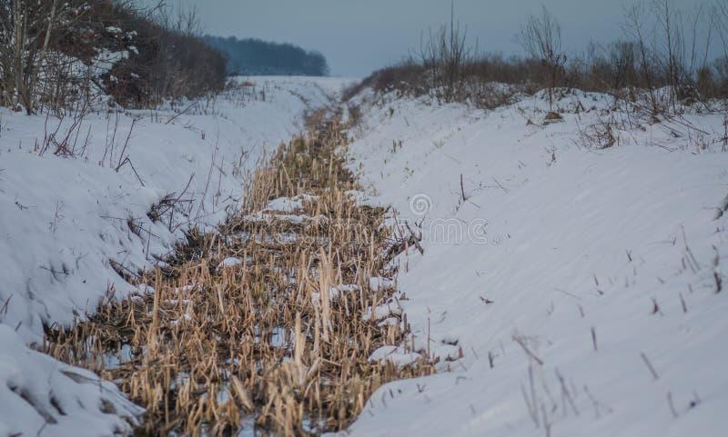 Le petit canall avec les mauvaises herbes sèches dans lui a couvert de neige photo libre de droits