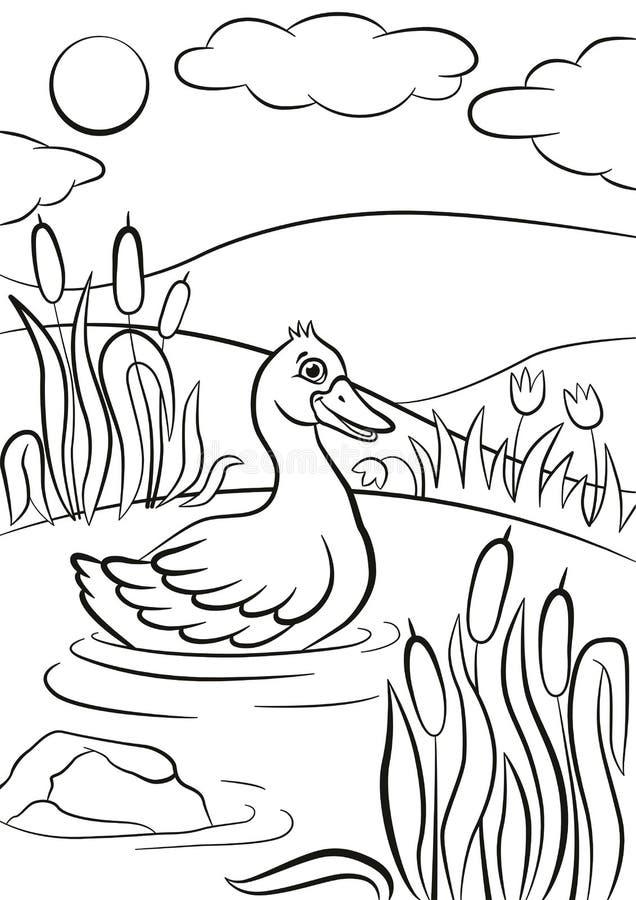 Le petit canard mignon nage sur l'étang Il sourire du ` s illustration libre de droits